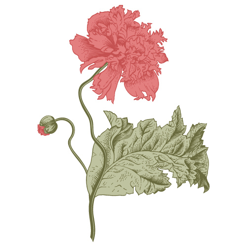 papava icon