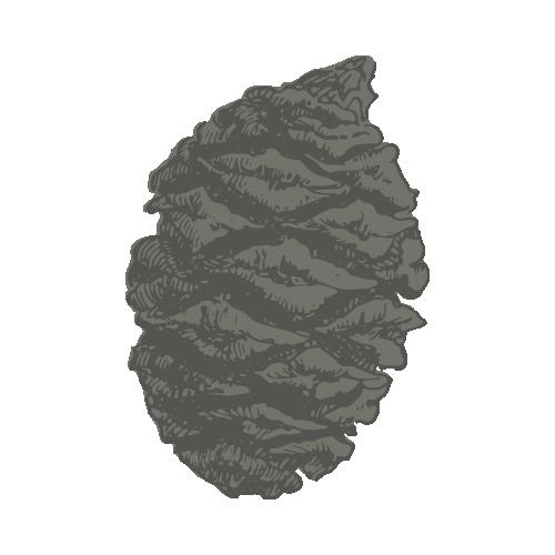 sequoia icon