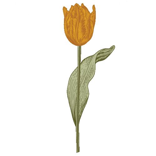 tulipa icon