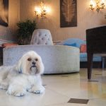 Dogs welcome at the Gonville Hotel