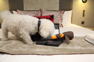 A dog tucking into her complimentary treats at the Gonville Hotel