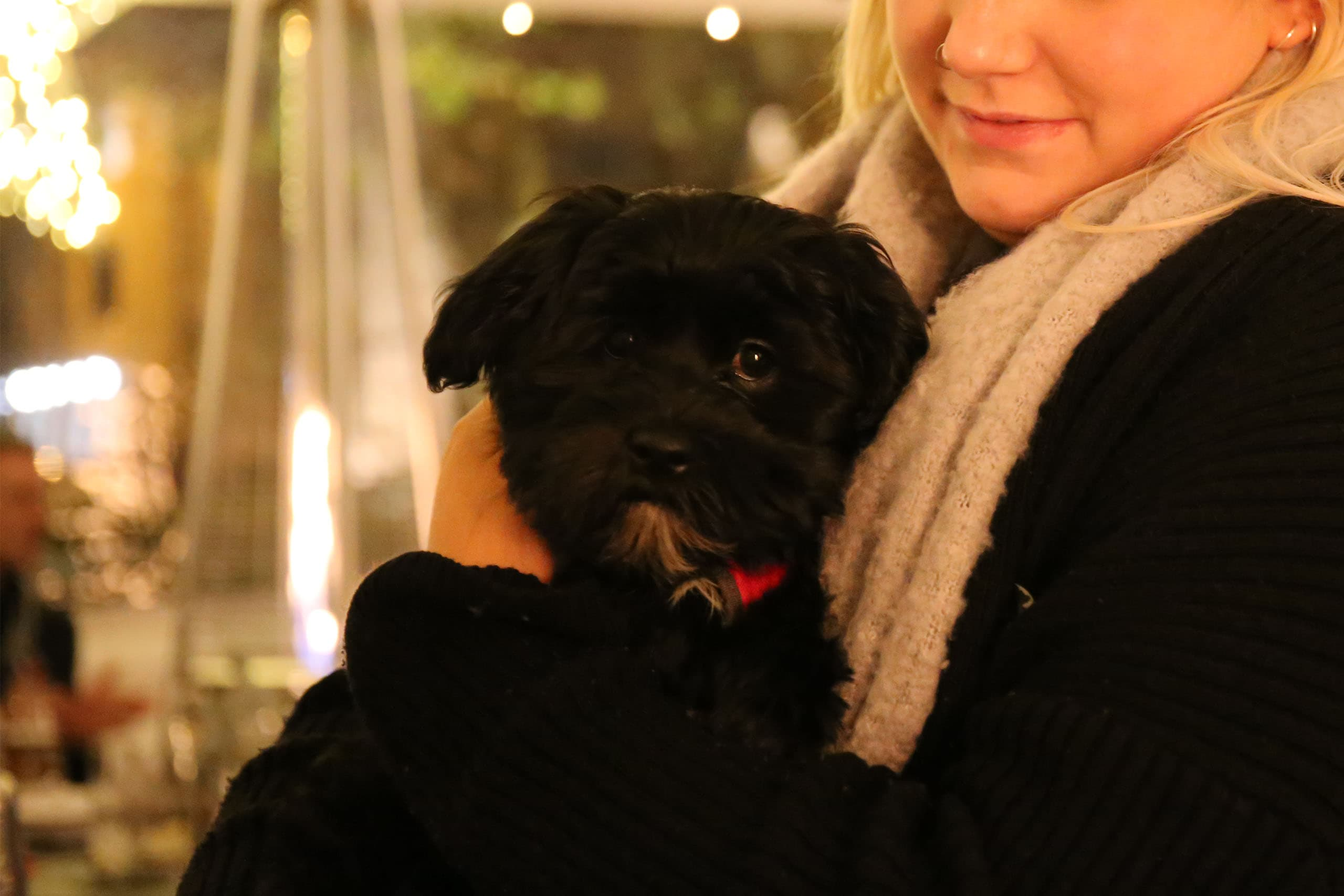Dogs welcome at Gonville Hotel's Winter Garden